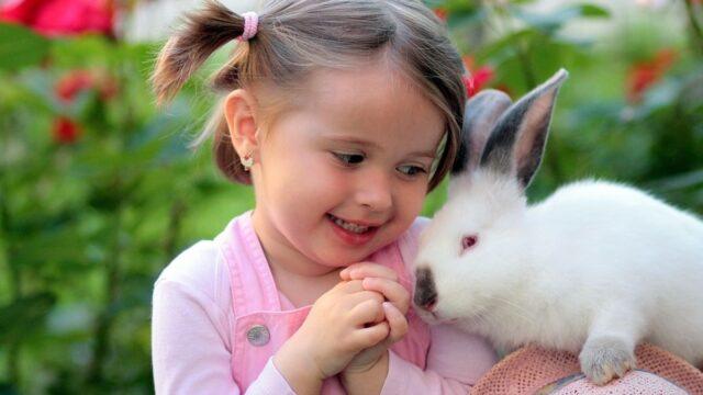 5 Best Classroom Pets For Elementary School 2020 Teacher S Guide Scholarlyoa Com